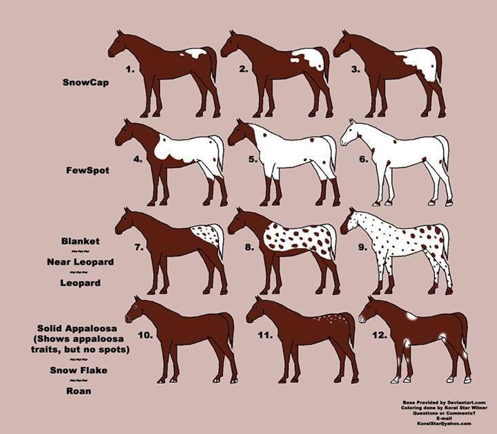 фото чубарая масть лошади